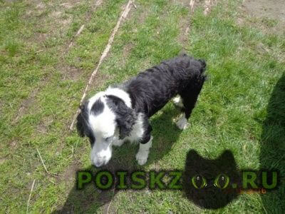 Найдена собака кобель г.Кондопога
