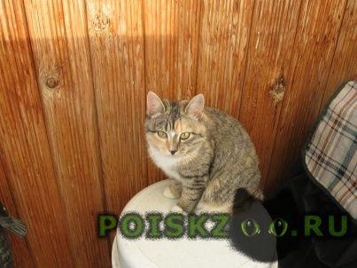 Пропала кошка муся г.Екатеринбург