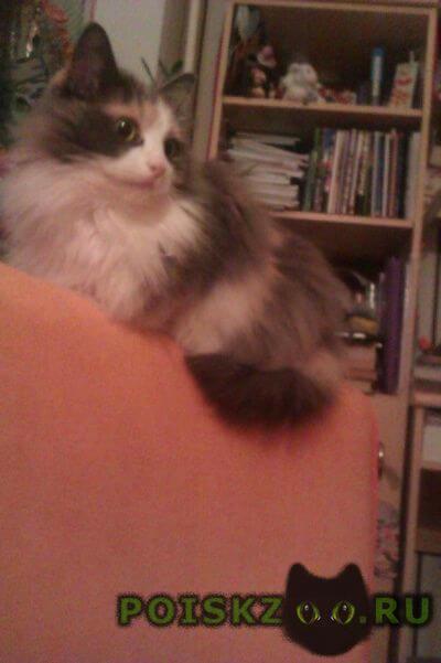 Пропала кошка г.Городец