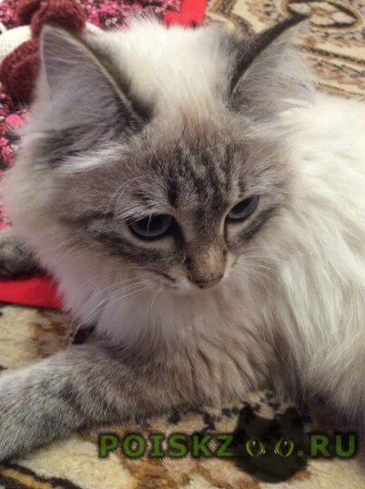 Пропала кошка г.Челябинск