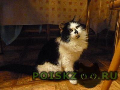 Пропал кот большой пушистый черно-белый. г.Клин
