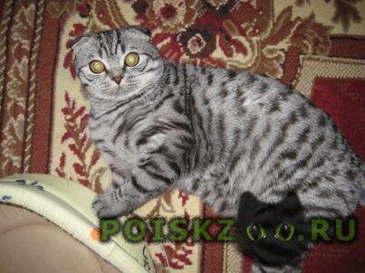 Пропал кот вышла в подъезд г.Иваново