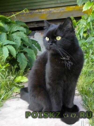 Пропала кошка домашняя г.Москва