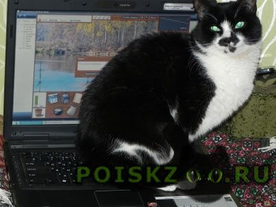 Пропала кошка домашняя к улице не приспособлена г.Москва