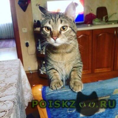 Пропала кошка кот г.Ростов-на-Дону