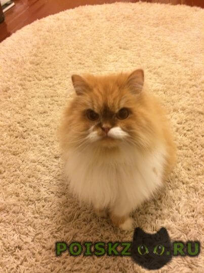 Пропал кот г.Иваново