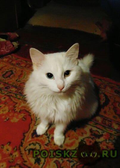 Пропала кошка г.Астрахань