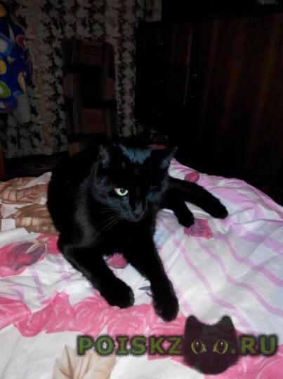 Пропал кот г.Севастополь