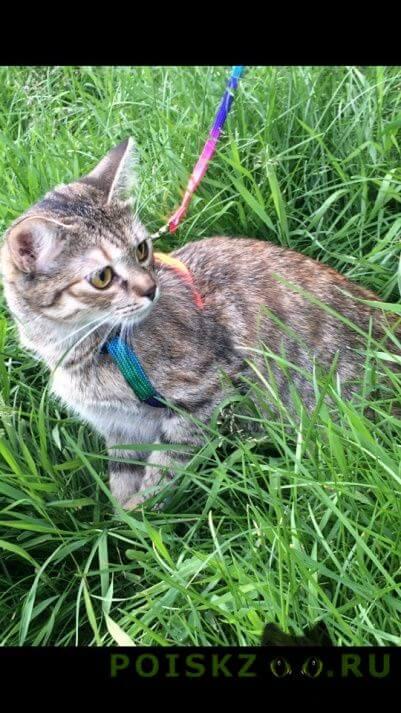 Пропала кошка тесса мес. г.Москва