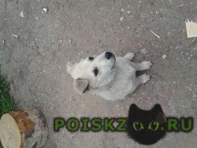 Пропала собака помогите найти альму г.Ярославль