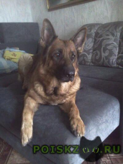 Пропала собака помогите найти собаку г.Омск