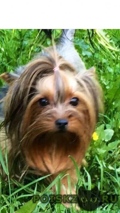 Пропала собака её очень ждут дома  г.Санкт-Петербург