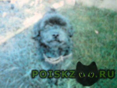 Пропала собака г.Верхняя Пышма