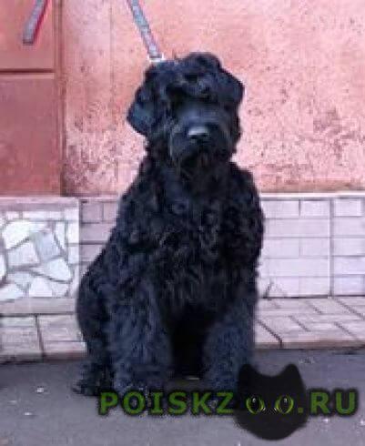 Пропала собака г.Улан-Удэ