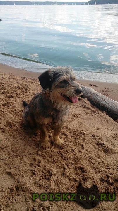 Пропала собака кобель заозерье г.Пермь