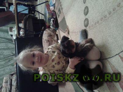 Пропала собака кобель дети очень плачут г.Донской