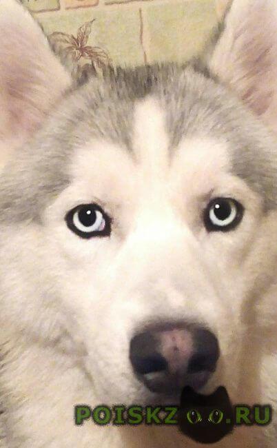 Пропала собака кобель потерялась собака г.Пушкино