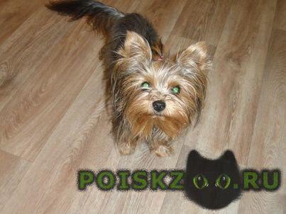 Пропала собака высокое вознаграждение гарантировано г.Пенза