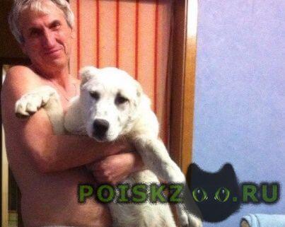 Пропала собака добрые люди  помогите найти друга  г.Евпатория
