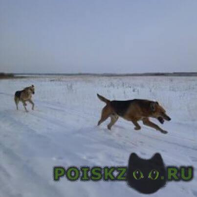 Пропала собака кобель г.Глядянское