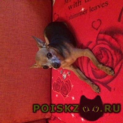 Пропала собака кобель, г.Новосибирск