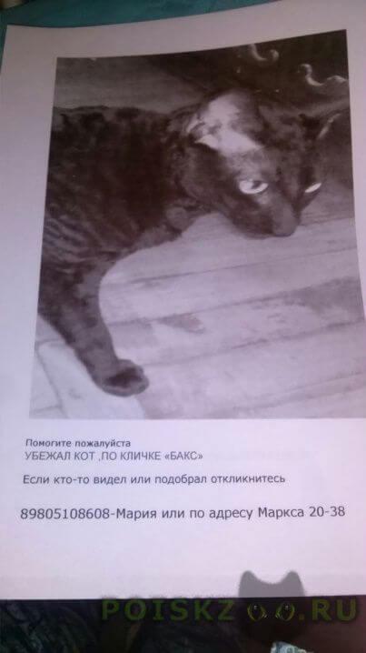 Пропал кот г.Обнинск