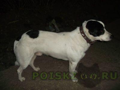 Найдена собака кобель г.Тольятти