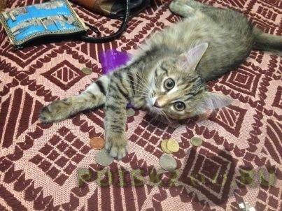 Пропала кошка г.Мытищи