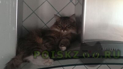 Пропал котик    г.Пермь