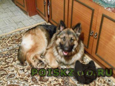 Пропала собака кобель г.Нижневартовск