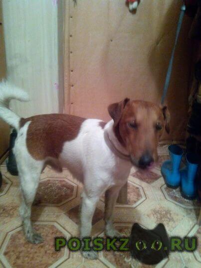Найдена собака потерявшийся г.Подольск