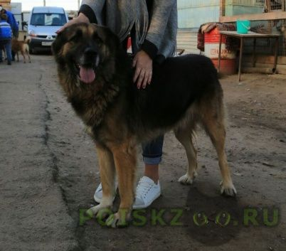 Пропала собака кобель в районе авиамоторная-фрезер г.Москва