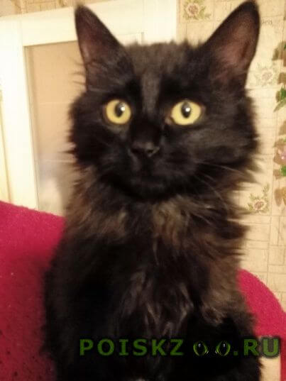 Пропала кошка будем рады любой информации нашем питомце   г.Гомель