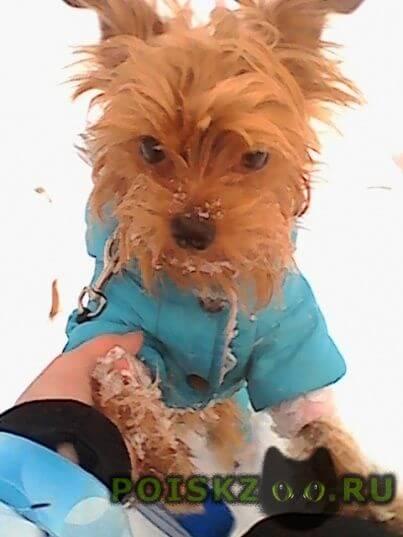 Пропала собака кобель г.Санкт-Петербург