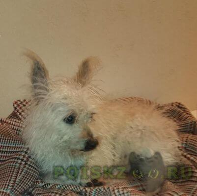 Найдена собака кобель маленький кобелек  г.Челябинск