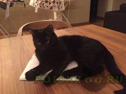 Пропал кот черный -подросток г.Екатеринбург