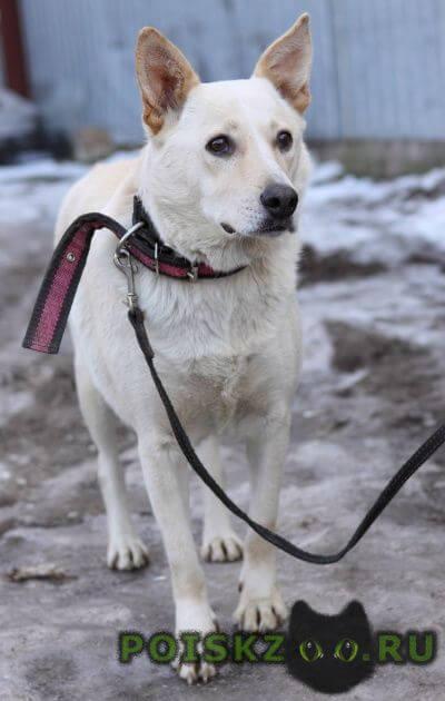 Найдена собака г.Самара