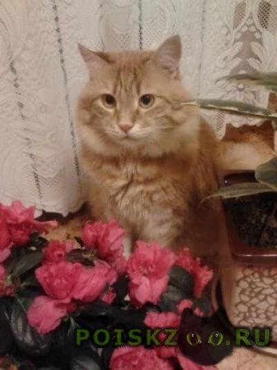 Пропал кот, помогите, пожалуйста, найти г.Севастополь