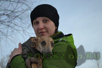 Пропала собака г.Иркутск