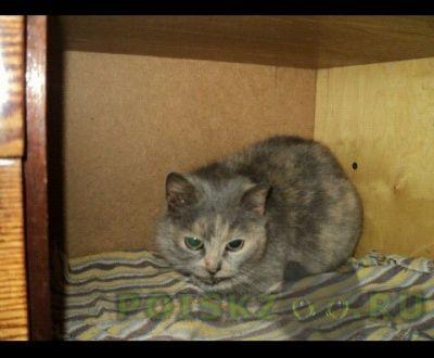 Найдена кошка ново-переделкино г.Москва