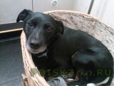 Пропала собака потерялась 22.08. красногвардейский район. в районе 14 часов дня. г.Санкт-Петербург