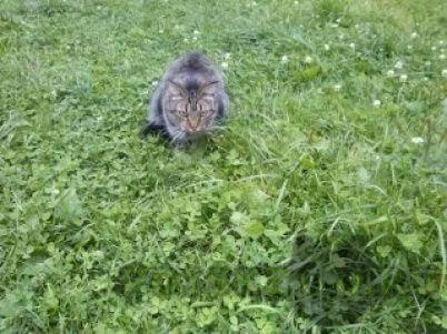 Пропал кот г.Краснокамск