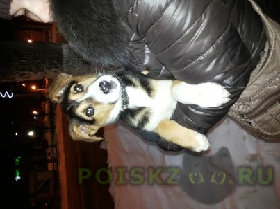 Найдена собака г.Чехов