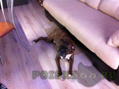 Пропала собака кобель г.Псков