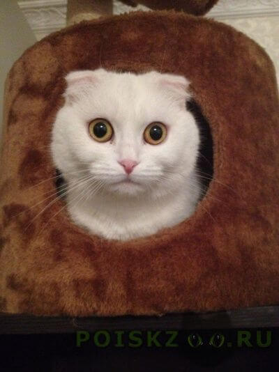 Пропала кошка г.Тверь