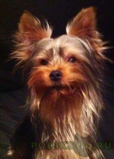 Пропала собака кобель наш любимец - люди, отзовитесь  г.Гатчина