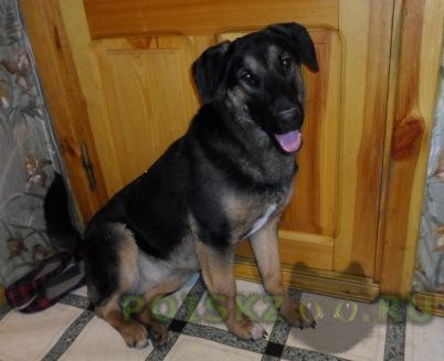 Найдена собака г.Ульяновск