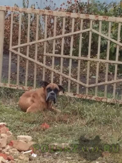 Найдена собака г.Базарный Карабулак