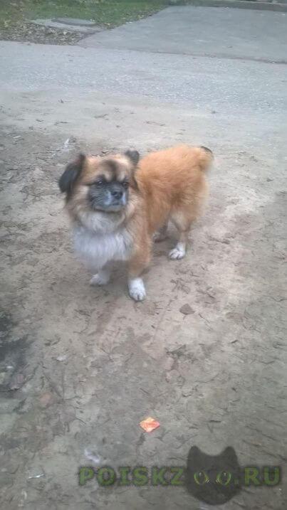 Найдена собака г.Орехово-Зуево