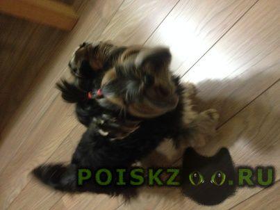 Пропала собака вознаграждение 10000 тысяч г.Воронеж